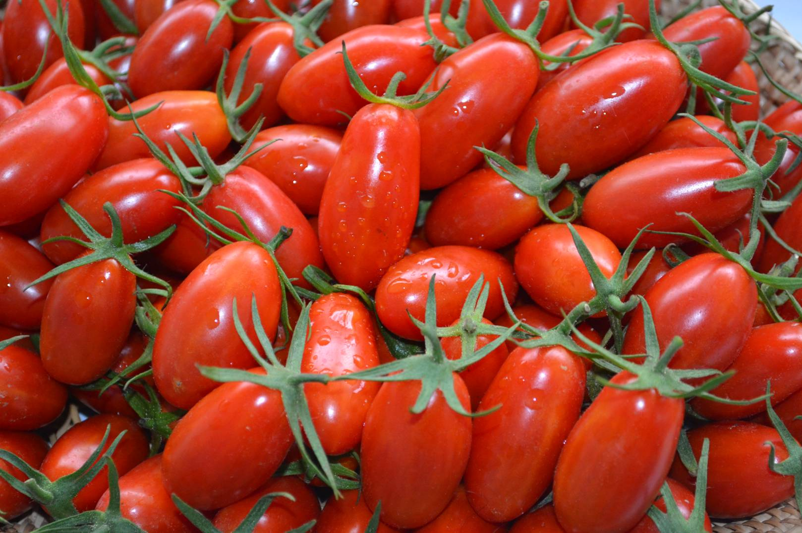 Application of carbonized rice husks improved the quality of tomato